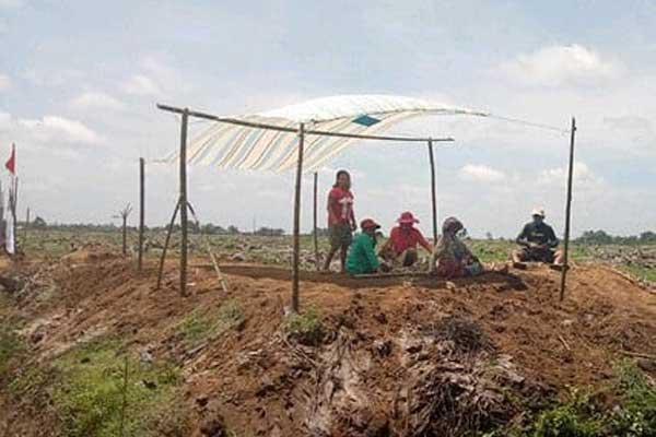 PTPN IV Kebun Bah Jambi sampai saat ini mengelola areal Hak Guna Usaha (HGU).
