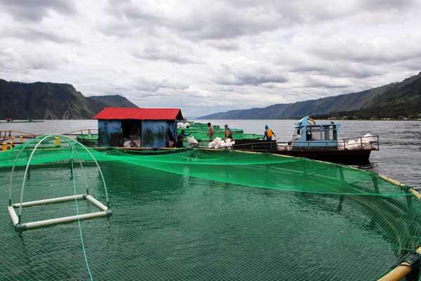 KJA DI DANAU TOBA: Keramba Jaring Apung milik PT Aqua Farm Nusantara (Regal Spring Indonesia) di perairan Desa Pangambatan-Lontung, Danau Toba. Menurut Manajer Lingkungan RSI, kualitas air Danau Toba secara umum tidak ada perubahan signifikan dari tahun ke tahun, karena danau Toba memiliki self recovery alami.  triadi wibowo/sumut pos.